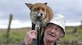老漢救狐貍,放生后5年狐貍每天送禮物, 但禮物讓人哭笑不得...