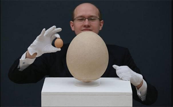 """""""世界巨蛋""""被发现,里面装有""""未生胚胎"""",被人高价买走(1)"""
