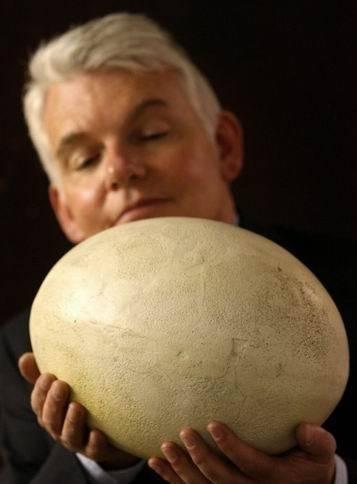 """""""世界巨蛋""""被发现,里面装有""""未生胚胎"""",被人高价买走(2)"""