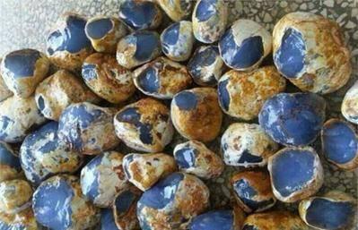 小伙捡回蓝石头,发大财了